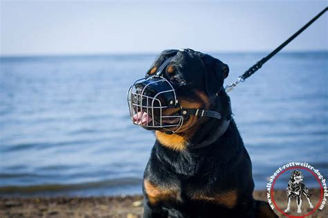 cage for rottweiler wire basket muzzle for rottweiler best muzzle m4 1075 rotty wire basket