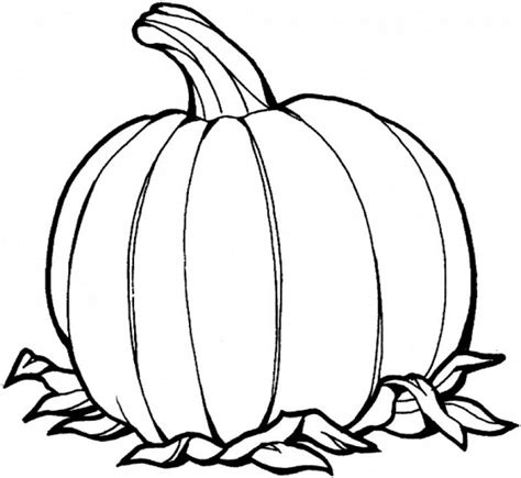 multiple pumpkin coloring pages blank pumpkin coloring pages coloring home
