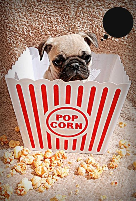 popcorn and dogs popcorn dogs