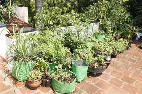 organic kitchen gardening how to grow your own organic kitchen garden sulekha