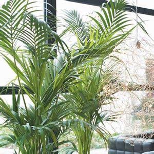 imagenes de plantas verdes de interior im 225 genes de plantas de interior im 225 genes