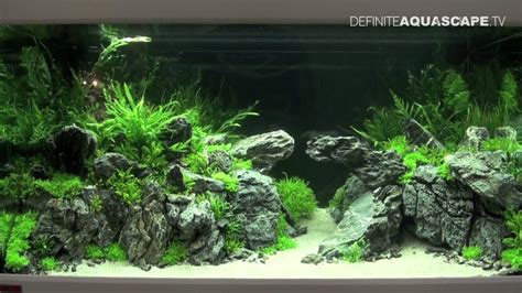 Planted Aquarium Aquascaping by Aquascaping Qualifyings For The Of The Planted