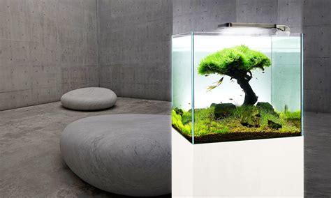 aquarium design eau chaude by olivier clavel fontaine bassin ou aquarium sur mesure