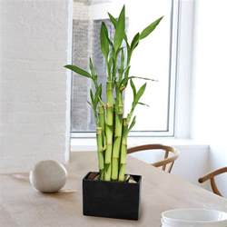 Caring For Flowers In A Vase Bamboo Lamp Photo Bamboo House Plants