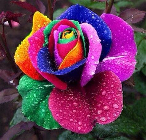 grossista fiori acquista all ingrosso trasporto semi di fiori da