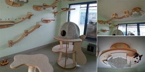 lovely cat room design home design garden
