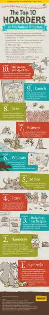 infographics animal kingdom 1848776543 top hoarders in the animal kingdom infographics