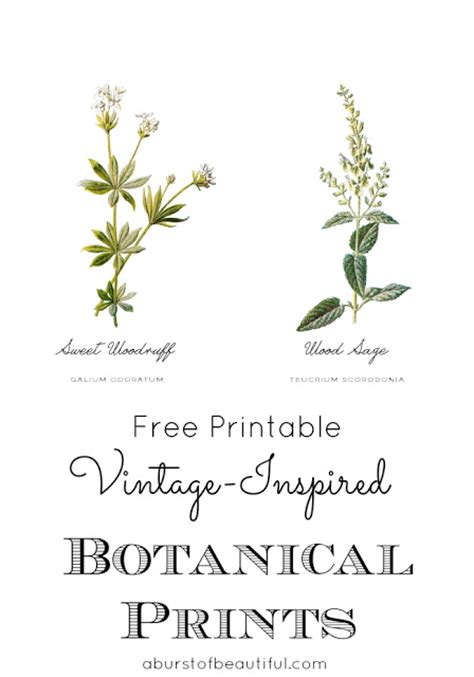 How To Decorate Your First Home by Free Vintage Inspired Botanical Printables A Burst Of