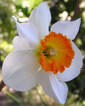 fiori di loro immagini di fiori ei loro nomi gpsreviewspot