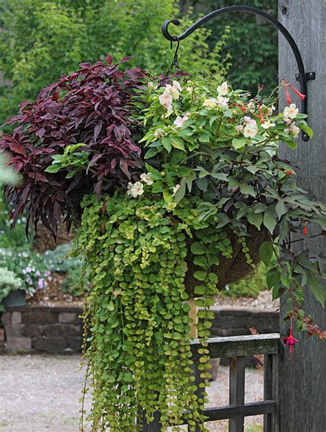 Hanging Vines For Planters by Planter Idea Book Container Gardens Pots Planters