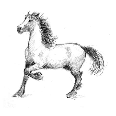 Sketches Horses by Drawing Learn How To Draw Horses Diana