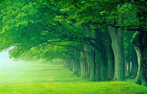 imagenes de paisajes verdes para pantalla fondo pantalla bosque verde