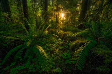 wallpaper hd jungle jungle wallpapers pictures images