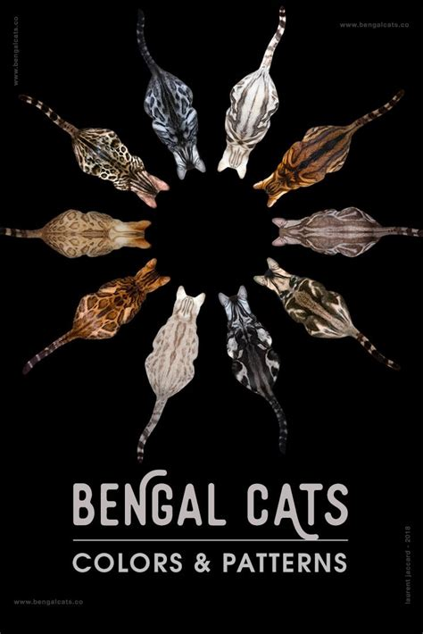 bengal cat colors bengal cat colors and patterns visual guide