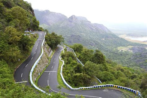 Meaning Of Trees yercaud hill station in tamil nadu complete guide