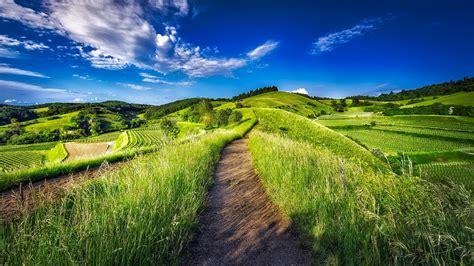 fondo pantalla prado naturaleza fondo de pantalla de prado camino valle pradera