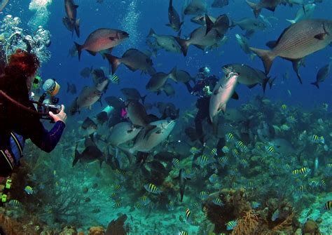 dive vacations belize honeymoons scuba diving vacations and adventure