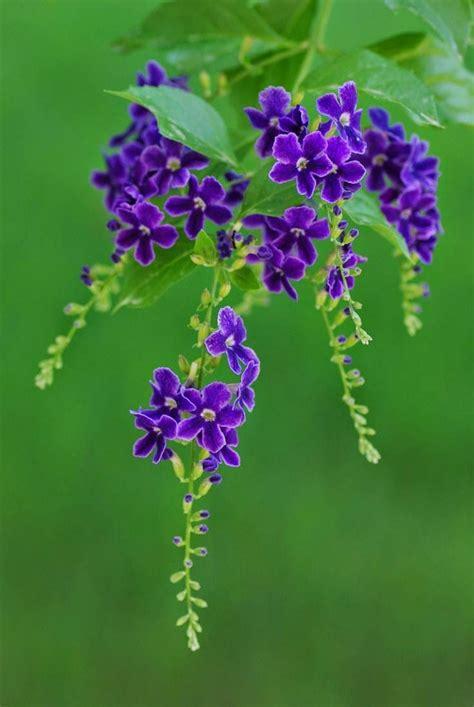 Purple Little Flowers Flower Pinterest Purple Flowers For Garden