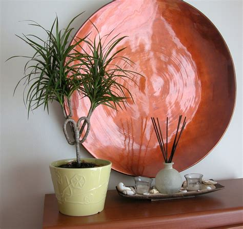 Interesting Indoor Plants gt madagascar dragon tree recipes to my daughter