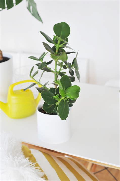 wohnung pflanzen die besten zimmerpflanzen f 252 r die wohnung bonny und kleid