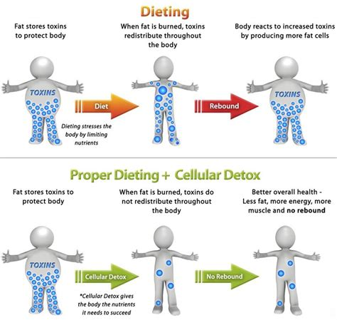 Cellular Detox Program by 21 Best Imagens Images On Cleanses
