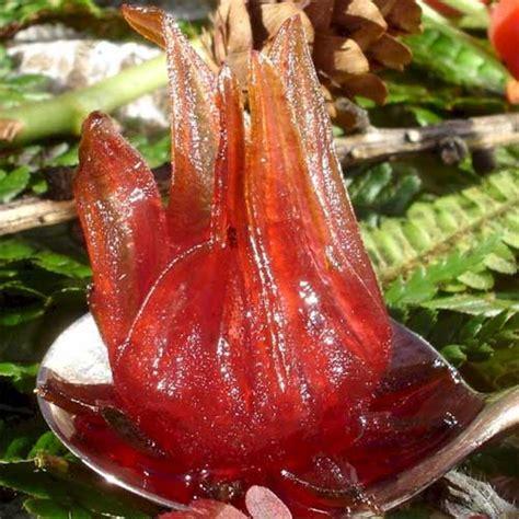 fiori di ibisco proprietà fiore di ibisco propriet 224 fare di una mosca