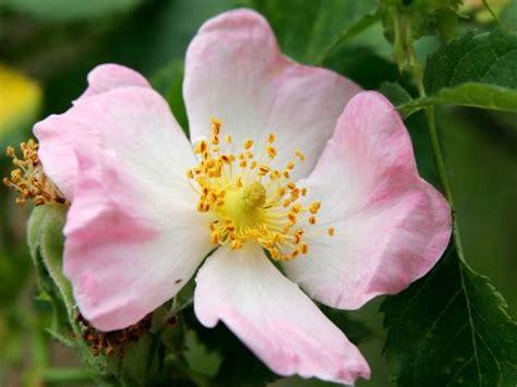fiori di bach neonati sconfiggere l apatia con l aiuto dell essenza floreale
