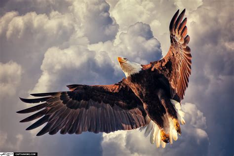 Home Design 5d Free Download by American Bald Eagle Flying In Cloudy Sky
