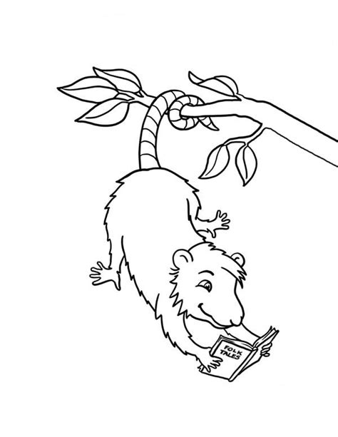Possum Coloring Pages Getcoloringpages Com Possum Colouring Pages