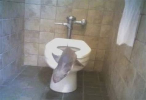 how do sharks use the bathroom weirdest things found stuck in the toilet bowl