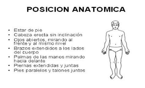 imagenes html posicion tu blog de anatom 237 a posici 243 n anat 243 mica ejes y planos