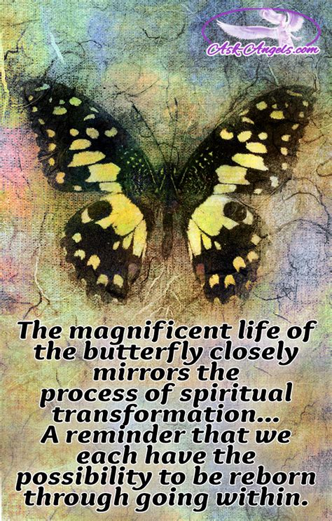 Butterfly Meaning Butterfly Meanings