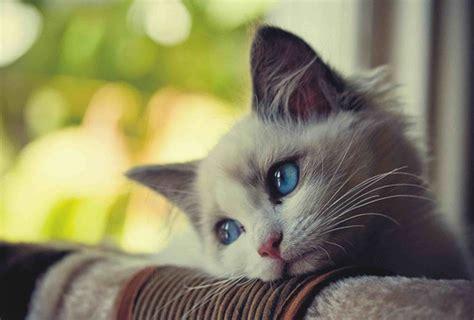 gambar kucing sedih   buat  turut bersedih