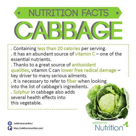 Cabbage Medicinal And Cosmetic Value by What Are The Health Benefits Of Cabbage Quora