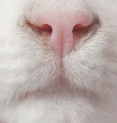 cat nose my cat in the images frompo