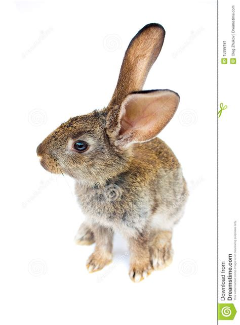 new year for rabbit happy new year rabbit stock image image 15398181