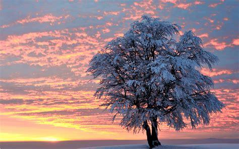 winter tree sunset winter tree desktop wallpaper wallpaperpixel