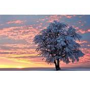 Winter Tree Wallpaper  WallpaperSafari