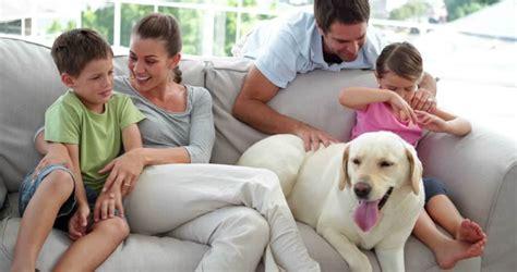 dog gets on couch when not home como impermeabilizar sof 225 produtos tecidos e dicas
