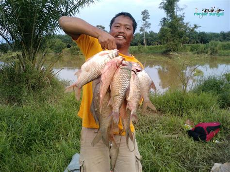 Joran Pancing Sungai renjer sungai lagi hasil terbaik dari sg bernam