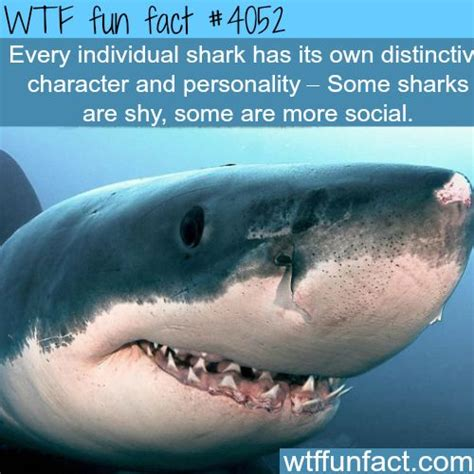 sharks house 25 best images about sharks on pinterest discovery channel the shallows movie and