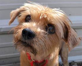 rescue dogs at spca need homes news