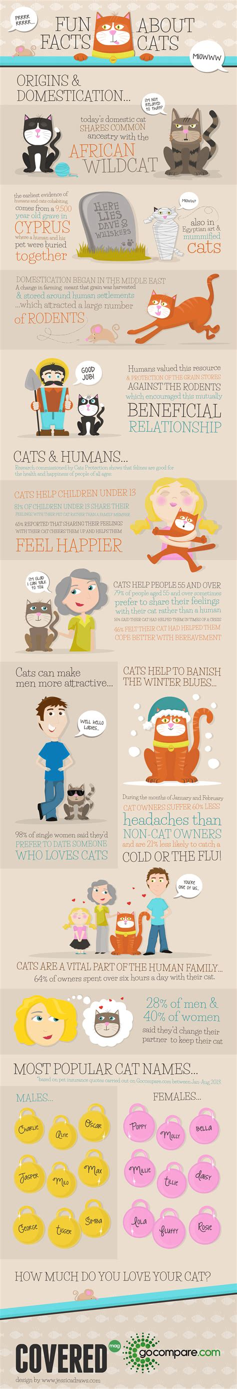 infographic fun facts about cats covered mag presented by gocompare com
