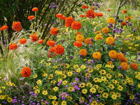 Garten Pflanzen Im August by Garten Impressionen Der Botanische Garten In M 220 Nchen Im