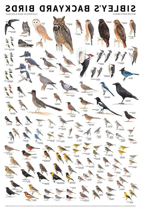 Kinds Of Birds In Your Backyard by Top 28 Kinds Of Birds In Your Backyard Kinds Of Birds In Your Backyard The Best Home Design