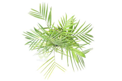 the complete guide to buying the best bamboo sheets of 2018 buy bamboo palm online order for bamboo palm plants in