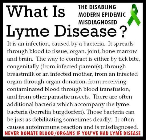 chronic lyme disease health news tips trends how lyme disease is transmitted lyme education