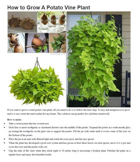 how to grow a herb garden share
