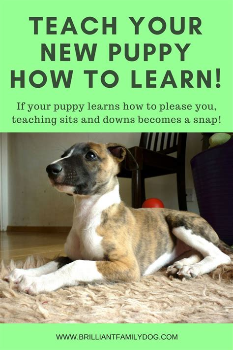 how to kennel your puppy best 25 puppy kennel ideas on breeders