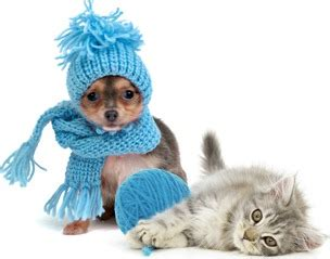 house temperature for dogs in winter animal control city of wellington kansas